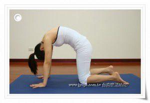 瑜珈教學44-背部伸展-貓式伸展