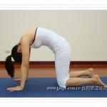 JYOGA樂活瑜珈-貓式伸展