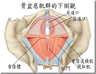 JYOGA樂活瑜珈-骨盆底肌群